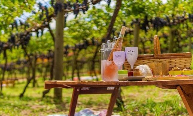 Monte Agudo: vinícola fica em local belíssimo e é ótima opção para enoturismo