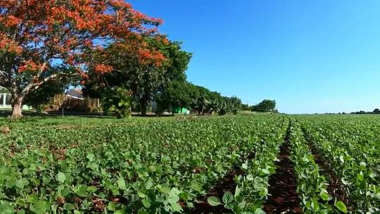 Floração do flamboyant vai além da beleza para os agricultores