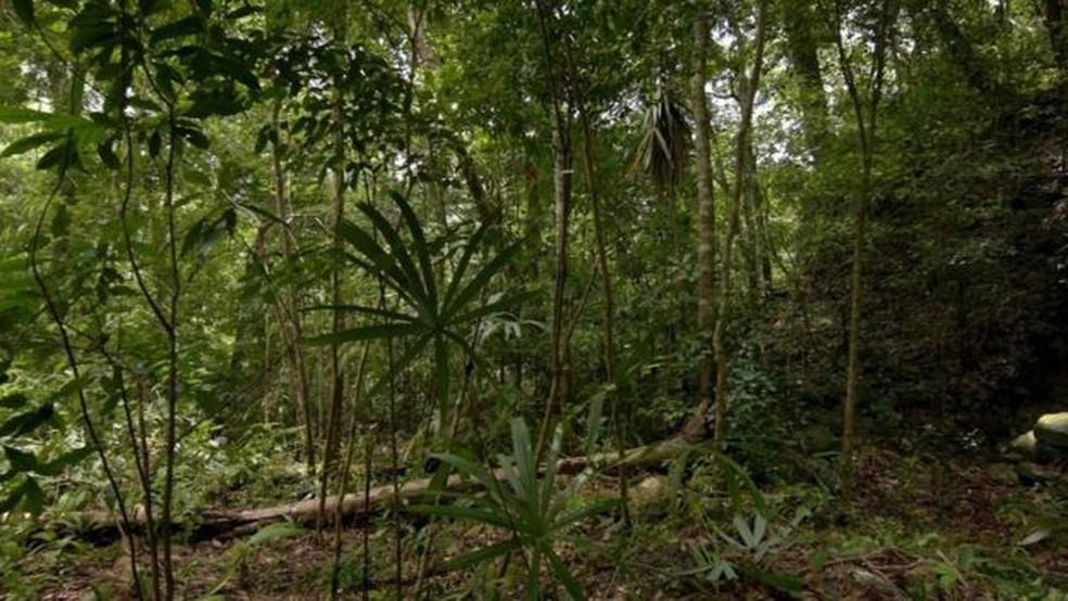 Área hoje inabitada por ter abrigado muitos milhões de maias a mais do que se pensava (Foto: Wild Blue Media/Channel 4/National Geographic )