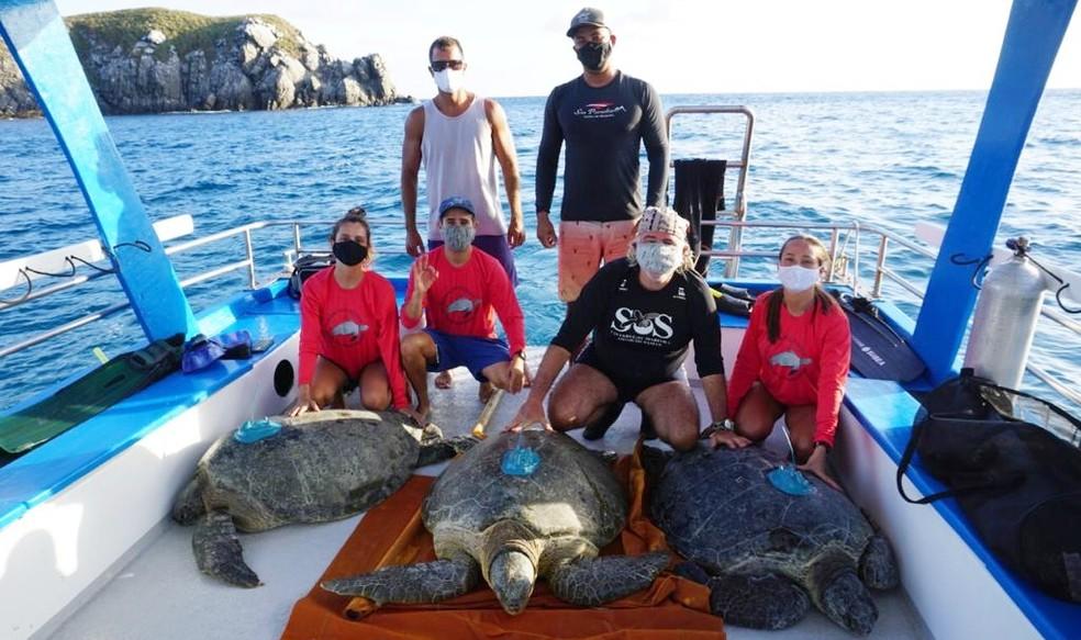 Os pesquisadores instalaram transmissores nas tartarugas — Foto: Armando Barsante/Acevo pessoal