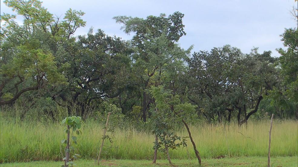 Local onde Ibram autorizou quadra 500 do Sudoeste — Foto: Reprodução/TV Globo