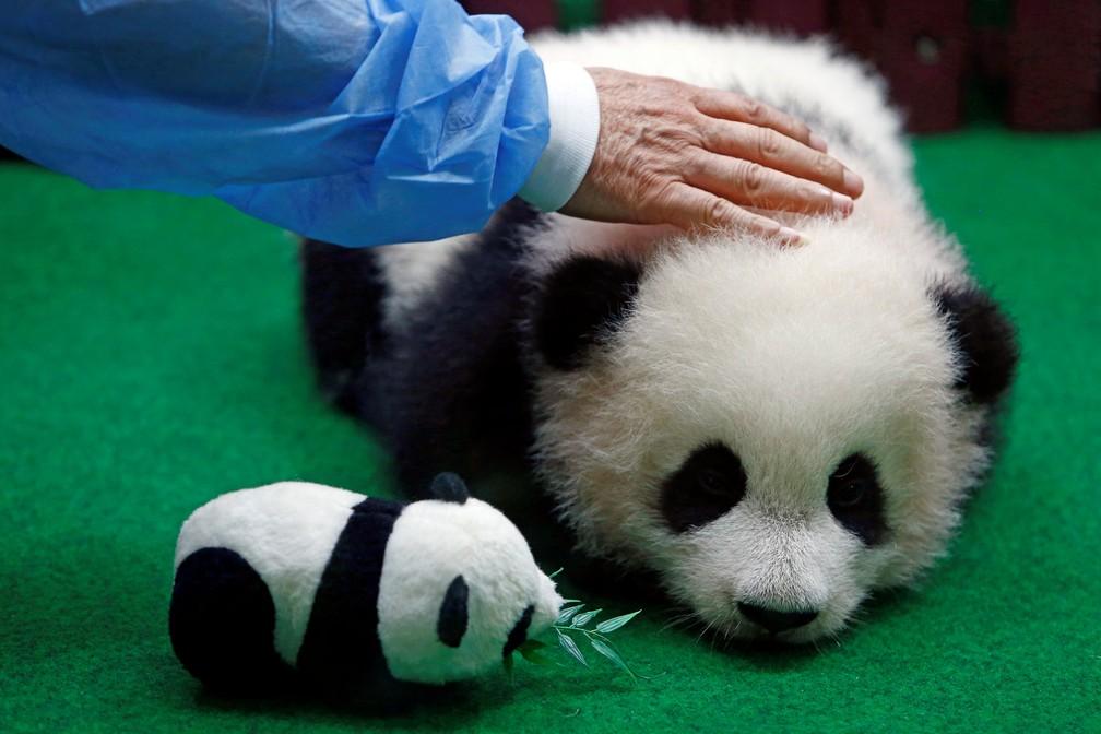Funcionário do zoo de Kuala Lumpur apresenta filhote de panda gigante, de quatro meses (Foto: REUTERS/Lai Seng Sin)