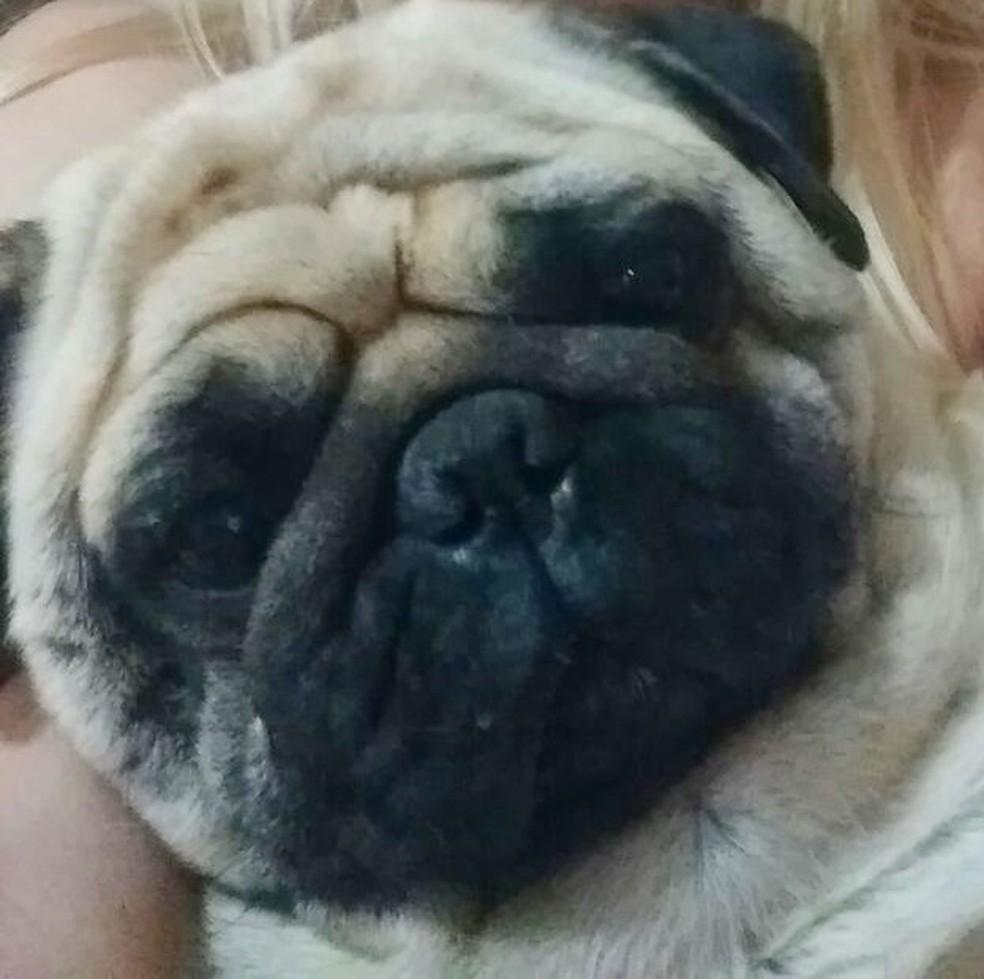 Cachorro da raça Pug estava sumido há um ano em Itapetininga (Foto: Arquivo Pessoal/Silmara Ribeiro do Amaral)