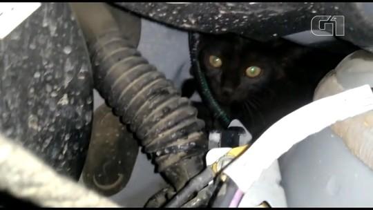 Gato viaja 180 km em motor de carro no Paraná; vídeo