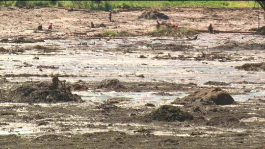 TCU investigará atuação da agência de mineração após tragédia de Brumadinho