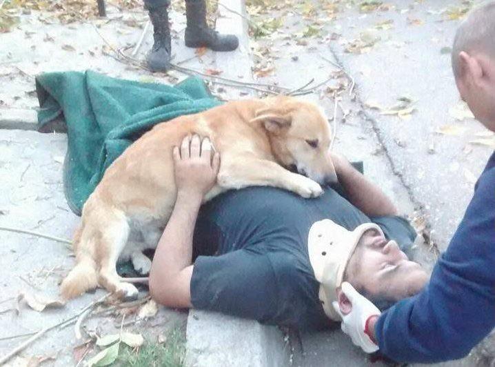 Cão 'abraça' dono ferido