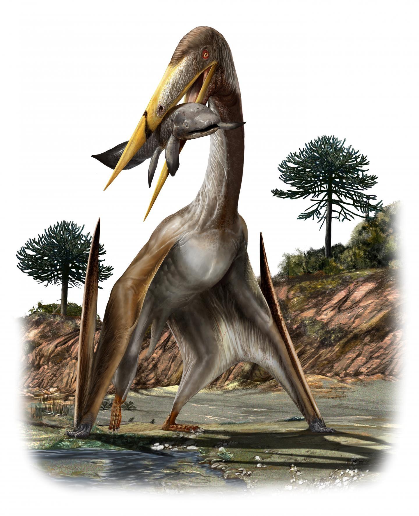 Ilustración de un pterosaurio de la especie Alanqa saharica (Foto: Davide Bonadonna)