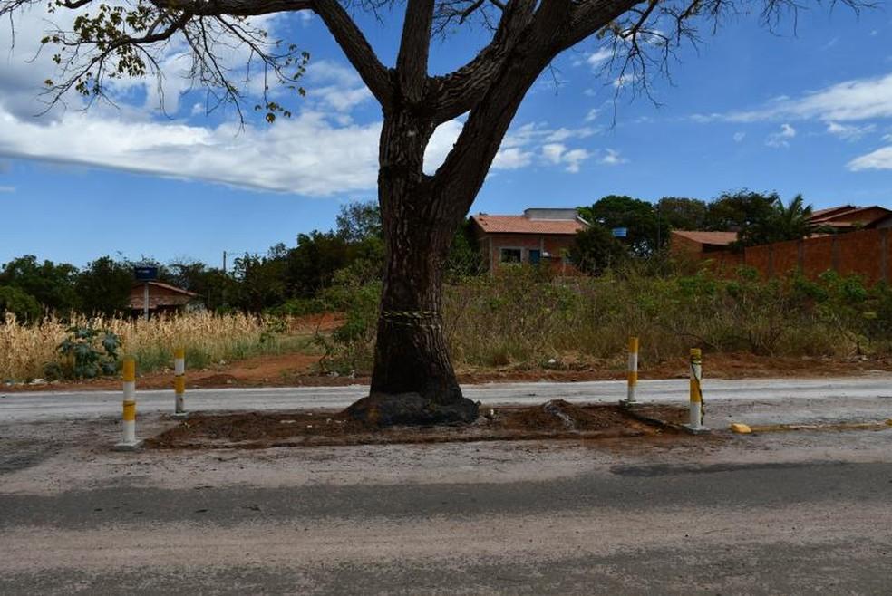 Pilares foram construídos ao lado de cajazeiro — Foto: Prefeitura de Paraíso/Divulgação
