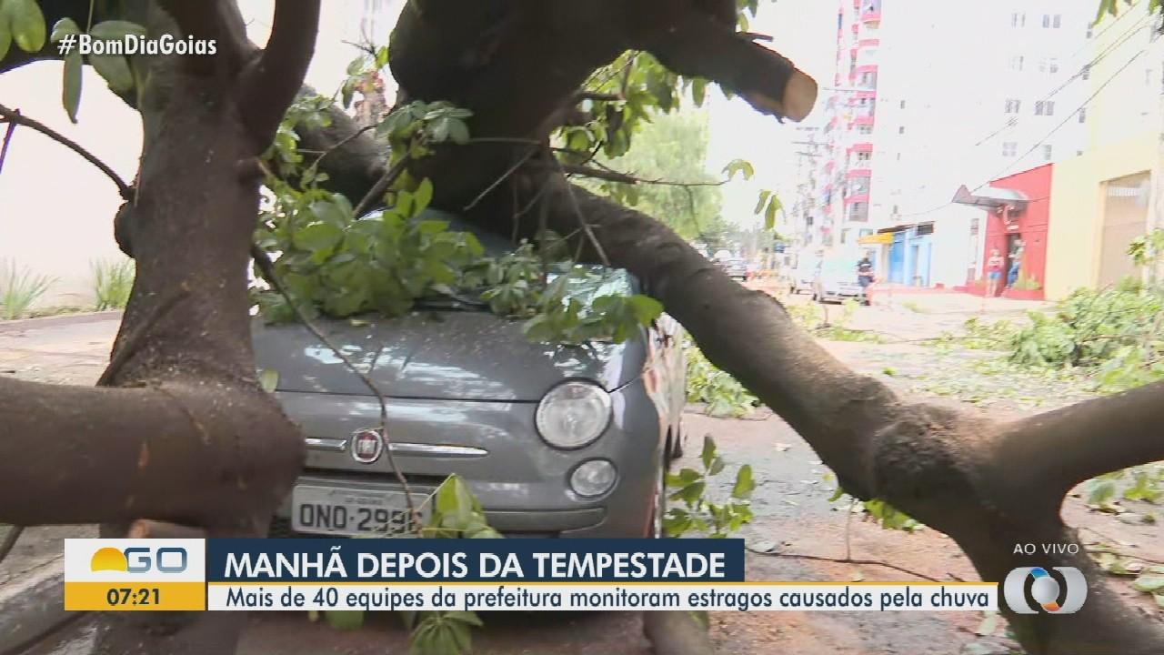 Árvore cai em cima de carro durante temporal em Goiânia