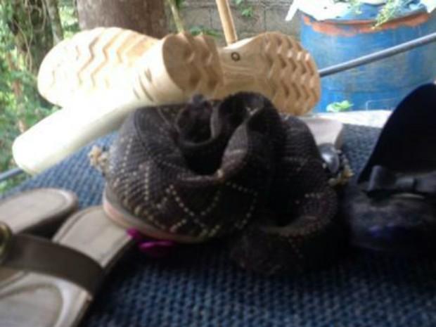 Cobra estava 'escondida' em um sapato (Fot Divulgação / Corpo de Bombeiros de Mairinque (SP))