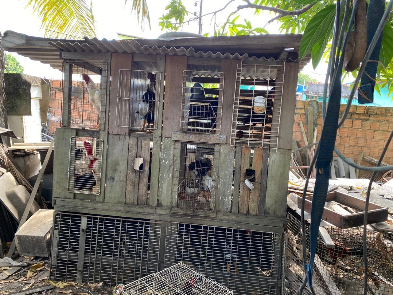 Homem é preso suspeito de manter animais silvestres em cativeiro em Manaus
