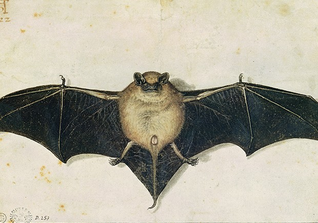A arte do crime. O morcego de Albrecht Dürer estava na sala da casa de Breitwieser (Foto: Bridgeman/Fotoarena)