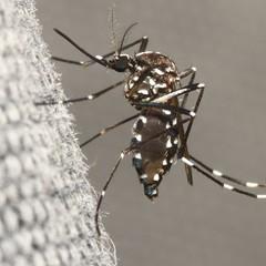 Os casos de dengue aumentaram 234,2% em relação ao mesmo período do ano passado (Foto: Thinkstock)