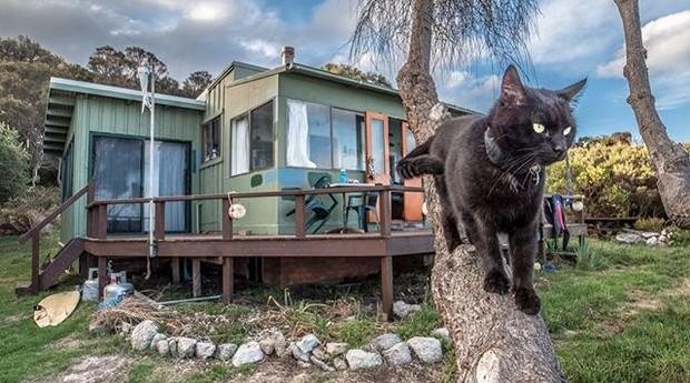Gato (Foto: Reprodução: Instagram)