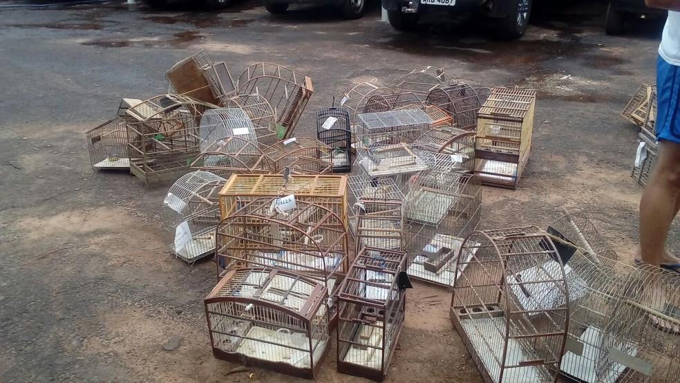 Gaiolas apreendidas foram destruídas em Presidente Prudente (Foto: Cedida/Polícia Militar Ambiental)