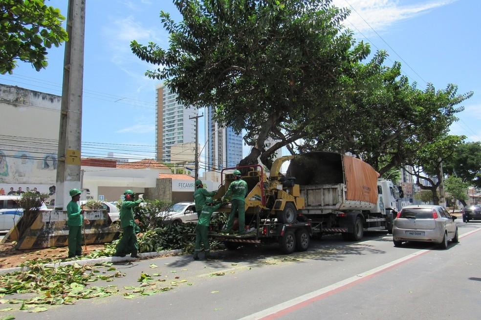 Equipes fazem a poda e usam máquina para o reaproveitamento dos resíduos — Foto: Prefeitura de Natal