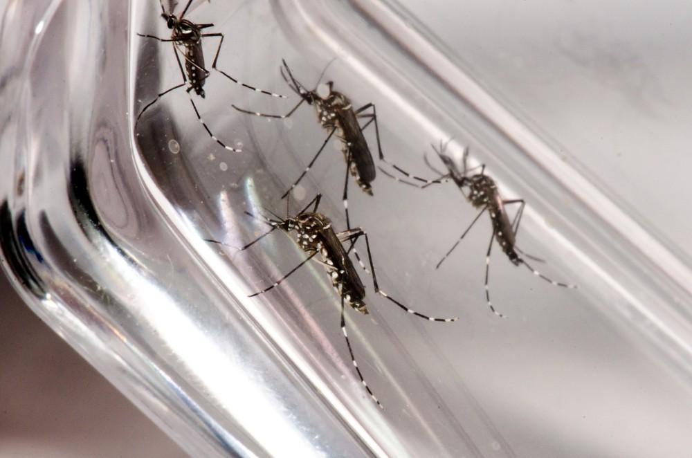 Com 56 novas confirmações, Paraná chega a 133 casos de dengue, diz Sesa