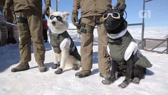 Cães ganham roupas e equipamento especial para patrulhar encostas geladas do Chile