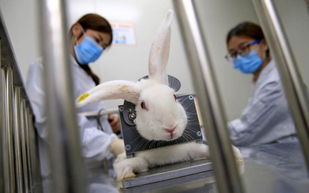 Equipe checa a temperatura corporal de um coelho na preparação do animal para um teste de droga em um laboratório de Tianjin, na China. Os 'corpos em um chip', que imitam a fisiologia humana, podem testar os efeitos de novas drogas, substituindo animais de laboratório — Foto: Reuters/Stringer