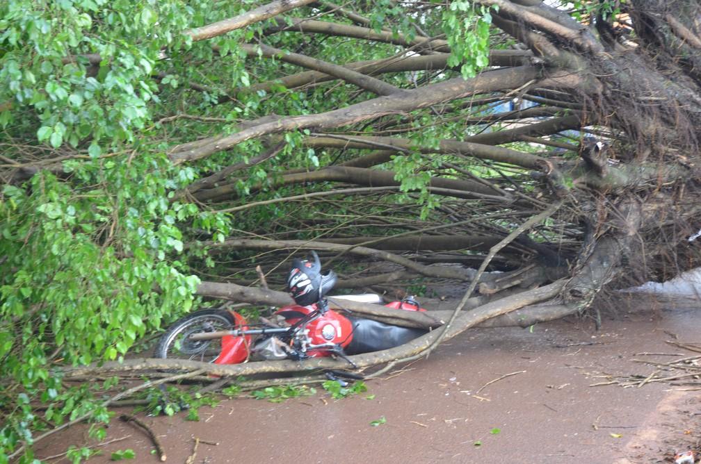 Assim como o piloto, moto ficou presa embaixo da árvore em Cacoal, RO (Foto: Rogério Aderbal/G1)