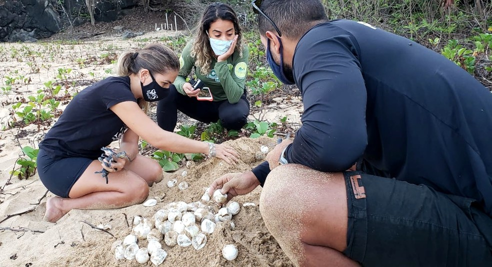 No ninho número 13, na Praia Cacimba do Padre, 71 ovos não eclodiram  — Foto: Ana Clara Marinho/TV Globo