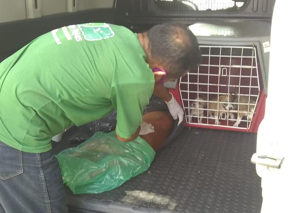 Cadela morreu, mas filhotes foram resgatados e esperam por adoção — Foto: Redes Sociais