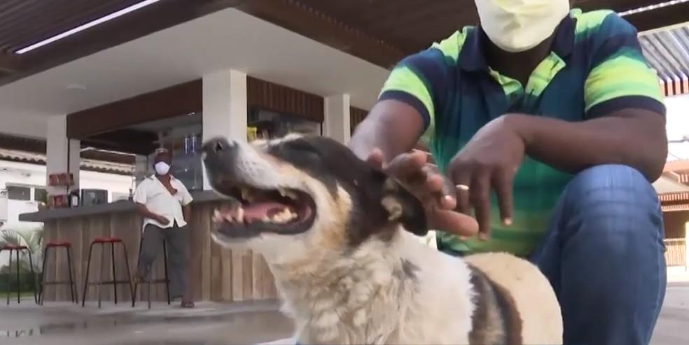 Boby espera por dono há quase três anos em hospital de Feira de Santana — Foto: Reprodução/TV Subaé