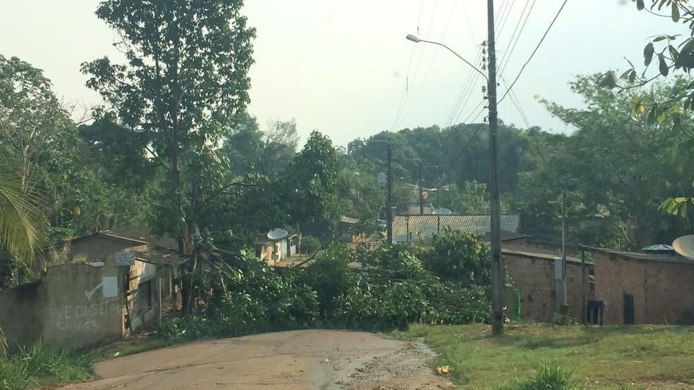 Árvore obstruiu passagem de veículos em uma rua do bairro Nacional  (Foto: Aléxia Letícia/Rede Amazônica)