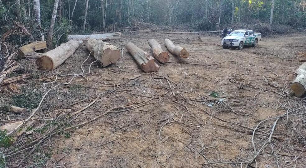 Polícia apreendeu nove toras de madeira retiradas ilegalmente da zona rural de Acrelândia — Foto: Arquivo/Batalhão de Policiamento Ambiental