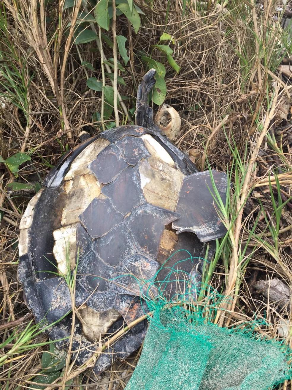 Salles disse que durante a ação encontraram uma tartaruga morta, já perdendo os cascos por não ter conseguido voltar para o mar — Foto: Arquivo pessoal/José Augusto Correia Salles