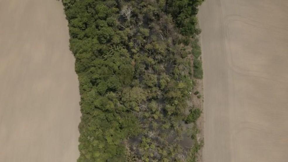Faixa de floresta ladeada por plantações de soja em Rondônia — Foto: BBC