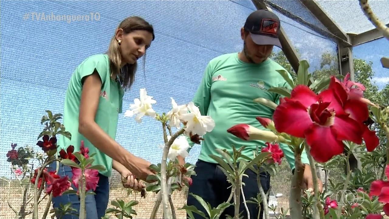 Casal constrói negócio produzindo rosas do deserto após ganhar uma de presente de casamento - Notícias - Plantão Diário