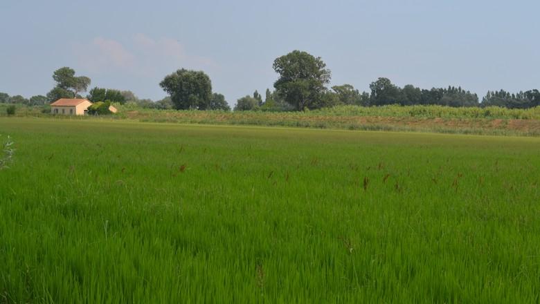 campo-interior-mato-verde-fazenda-rural-propriedade-mata (Foto: Alana Fraga/Ed. Globo )
