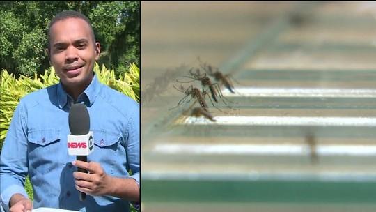 Mosquitos Aedes aegypti já estão resistentes a alguns inseticidas