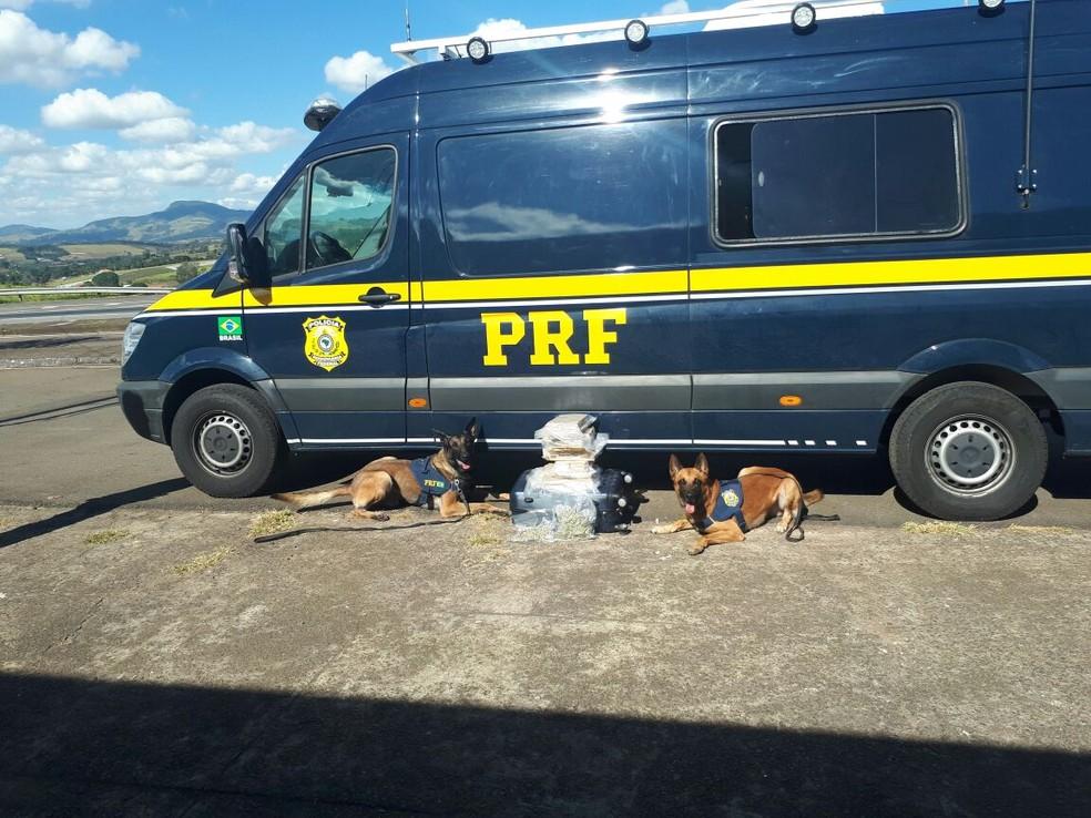 Drogas foram encontradas por cães farejadores na Fernão Dias, em Pouso Alegre (Foto: Polícia Rodoviária Federal)