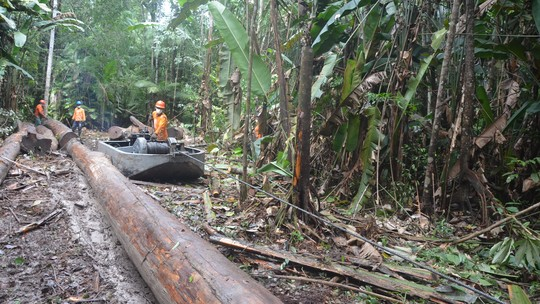 Foto: (Divulgação/Instituto Floresta Tropical)