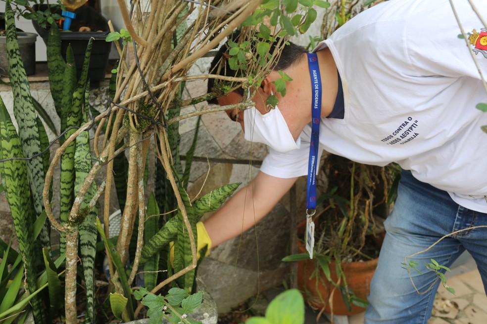 Agente vistoria vasos de plantas e outros objetos que possam ter foco do mosquito da dengue — Foto: TV Globo/ Reprodução