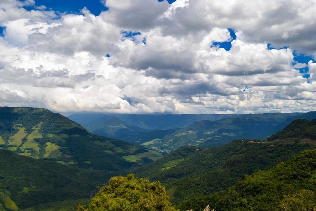 Mata Atlântica é alvo de recuperação florestal no Brasil — Foto: Pixabay