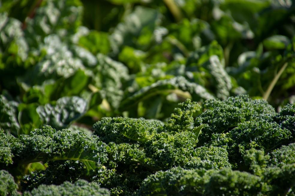 Principal vantagem em se cultivar no inverno é a escassez de chuvas fortes e diminuição de pragas — Foto: Ouro Safra/Divulgação