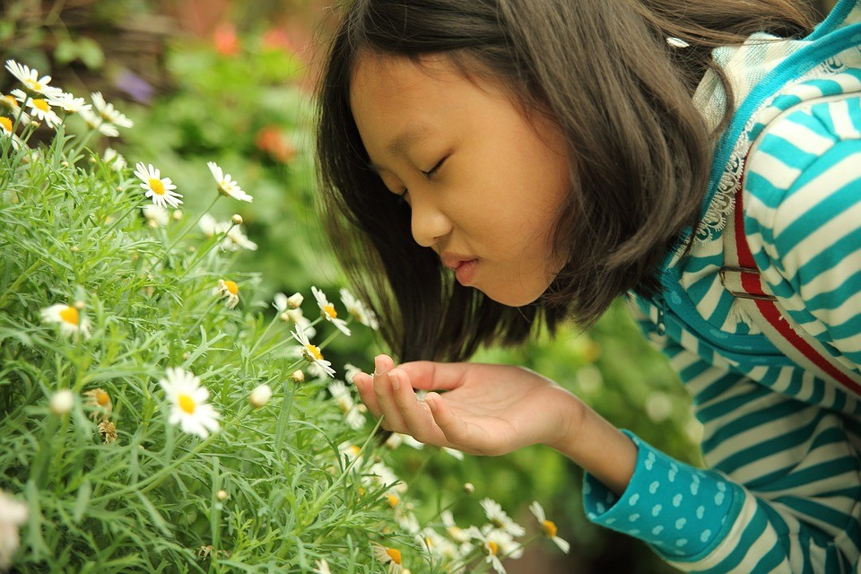 A capacidade de cheirar vai diminuindo naturalmente com a idade (Foto: Pixabay/JohnsonGoh/Creative Commons)