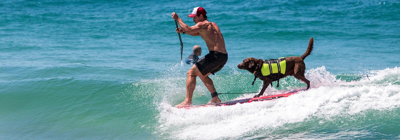 OFF INDICA Bono, O Cão Surfista