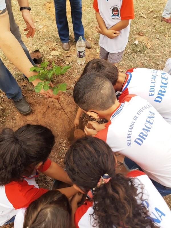 Dia da Árvore é celebrado com plantio de mudas e ações de conscientização com estudantes na região de Presidente Prudente thumbnail