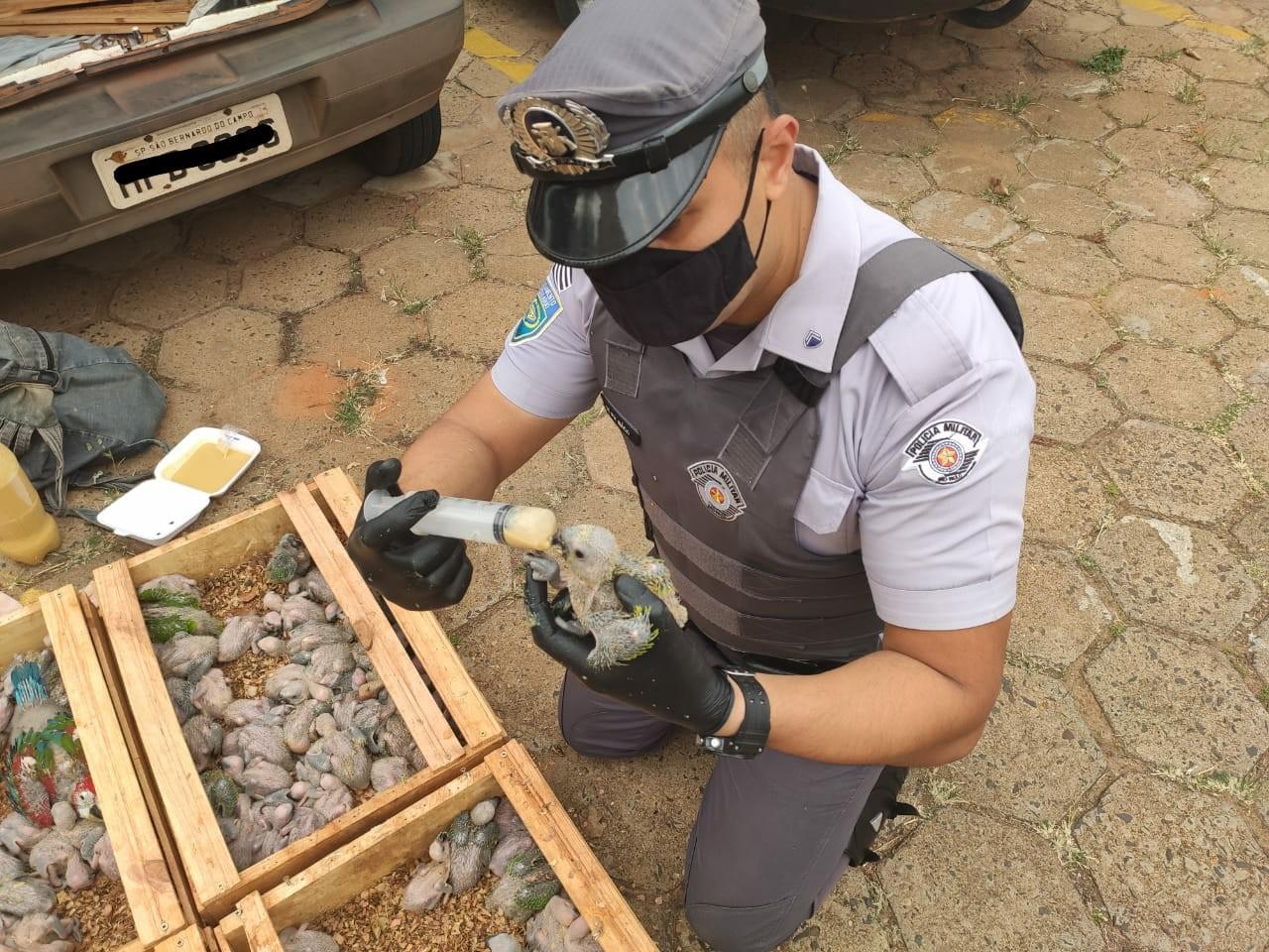 Trio é preso após polícia flagrar transporte irregular de mais de 100 papagaios em Pongaí
