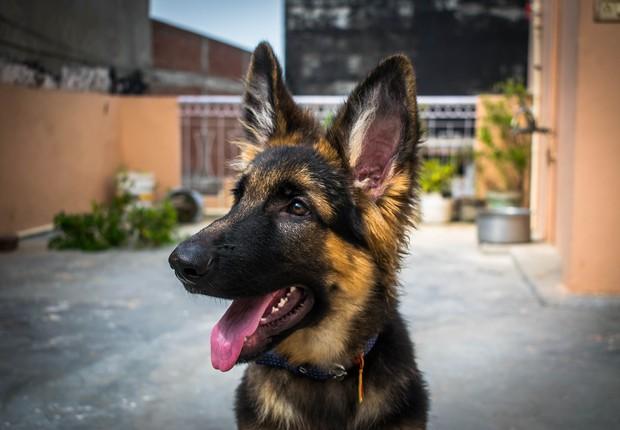 Cachorro - dog - amor - pet -adoção (Foto: devashishsharma420/Pixabay)