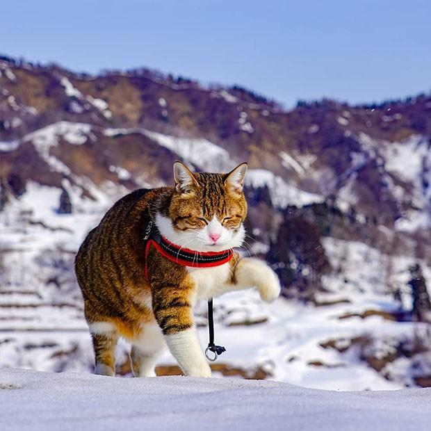 Tudo começou porque um dos gatos não se adaptava bem à estadia oferecida pelo Pet Shop. (Foto: Instagram/the.traveling.cats)