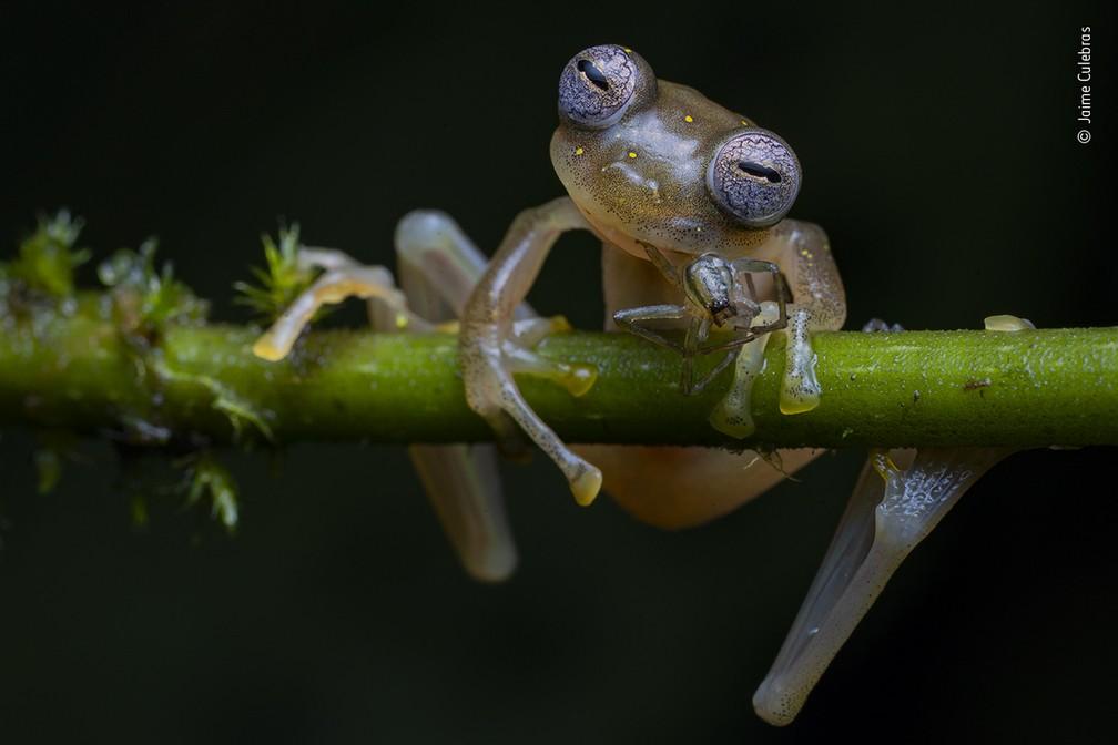 Vida em Equilíbrio, de Jaime Culebras, da Espanha — Foto: Jaime Culebras/Wildlife Photographer of the Year/BBC