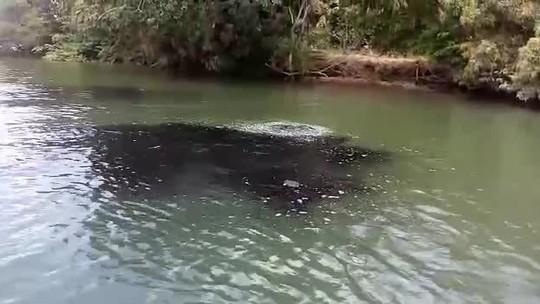 Manchas escuras aparecem em trecho do Rio São Francisco em Alagoas
