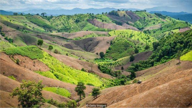 Mesmo as terras que foram desmatadas para servir de pastagens, por exemplo, podem voltar a ter florestas com a ajuda certa (Foto: GETTY IMAGES via BBC)