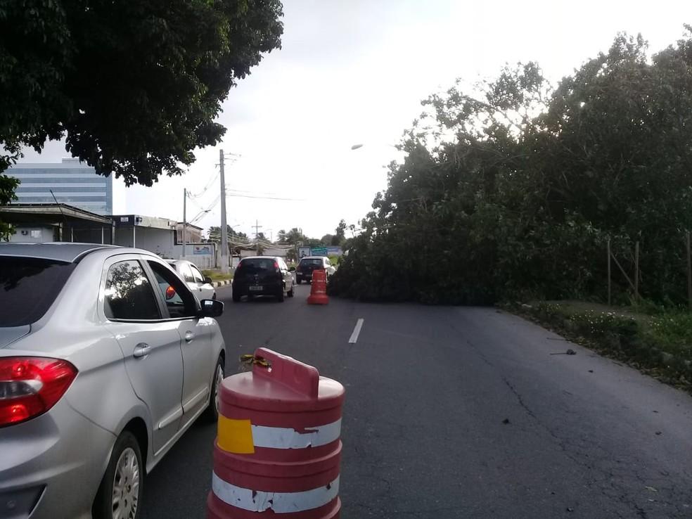 Parte de árvore cai em faixa de avenida em Lauro de Freitas — Foto: Cid Vaz/TV Bahia