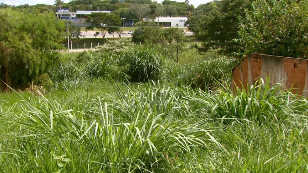 Terreno sem manutenção gera reclamações em São João da Boa Vista (Foto: Rodrigo Sargaço/ EPTV)